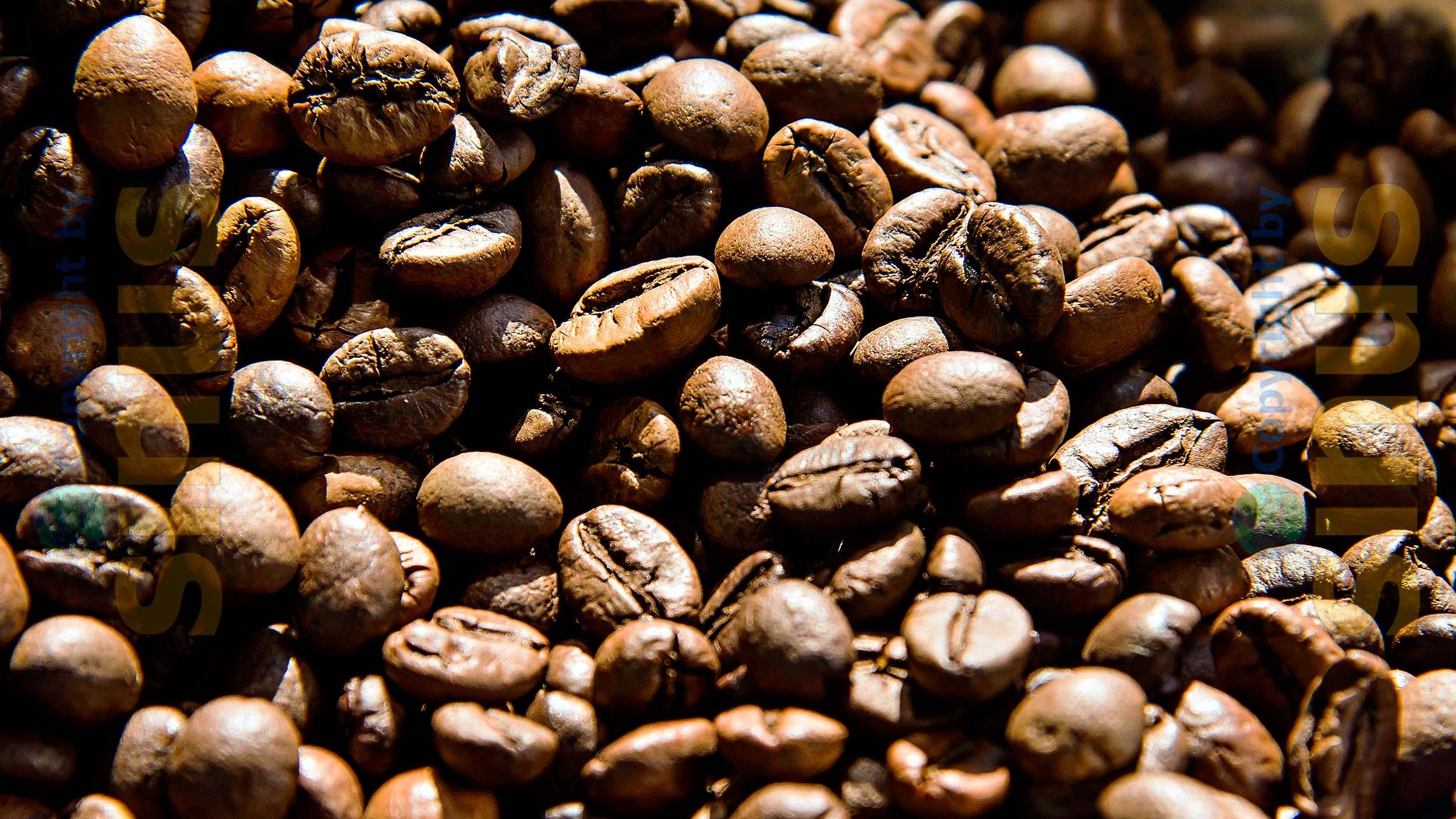 aus diesen Bohnen wird fein duftender Kaffee