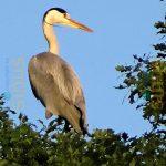 unbekannter Vogel